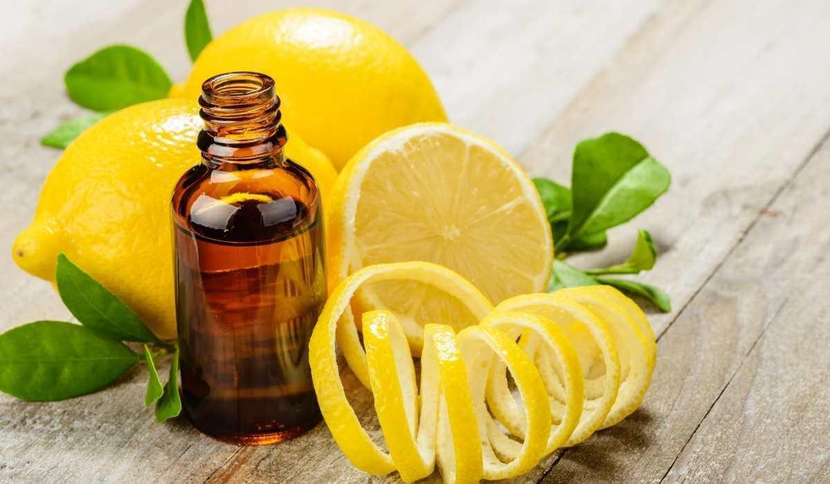 7 Best Essential Oils For Tick Bites On Pets & Humans