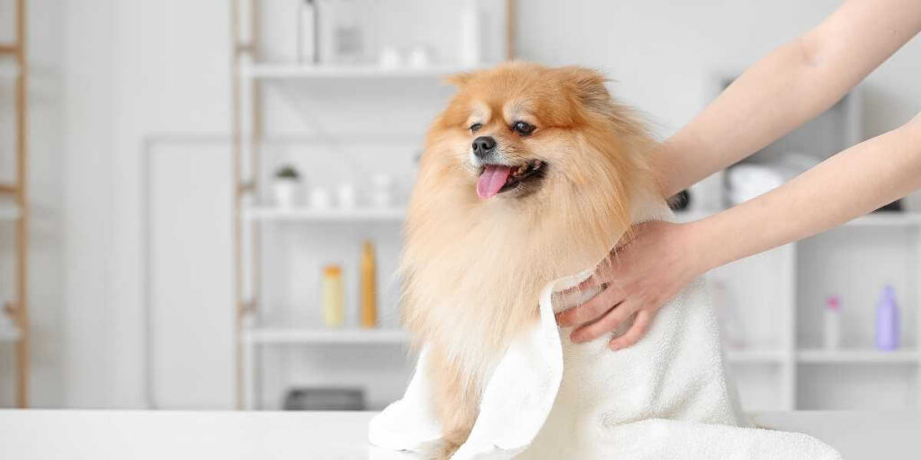 Is Castile Soap Safe For Dogs